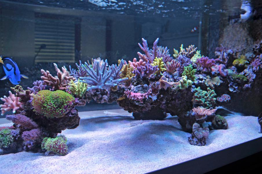 AQUASCAPING...What are the best ways to hold it together ...