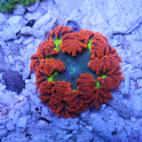 Rock Flower Anemone B2 59-49.jpg