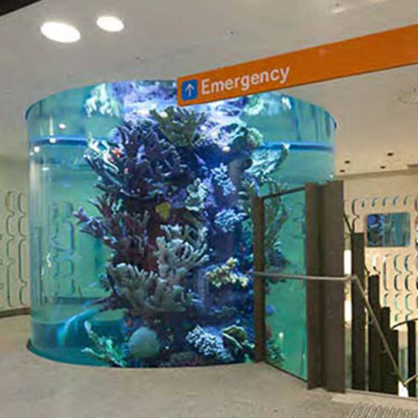 royal-childrens-hospital-aquarium4.jpg