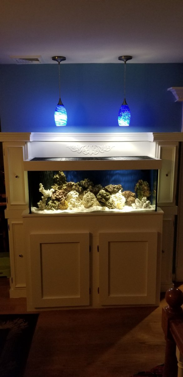 saltwater tank.jpg