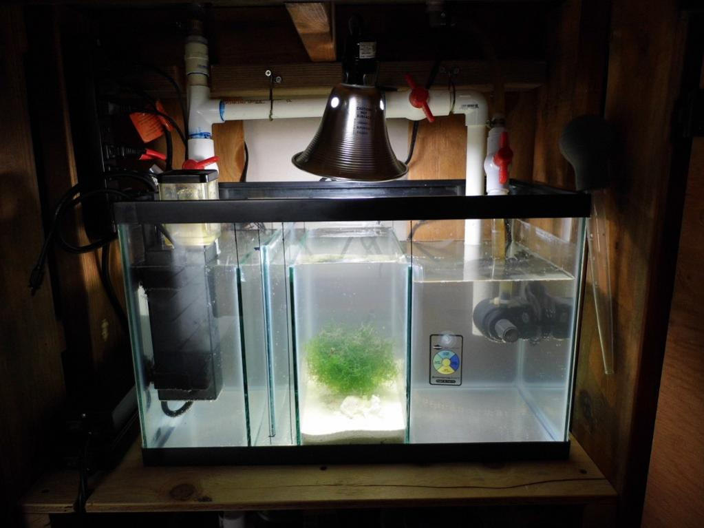 Chaeto Anyone Reef2reef Saltwater And Reef Aquarium Forum