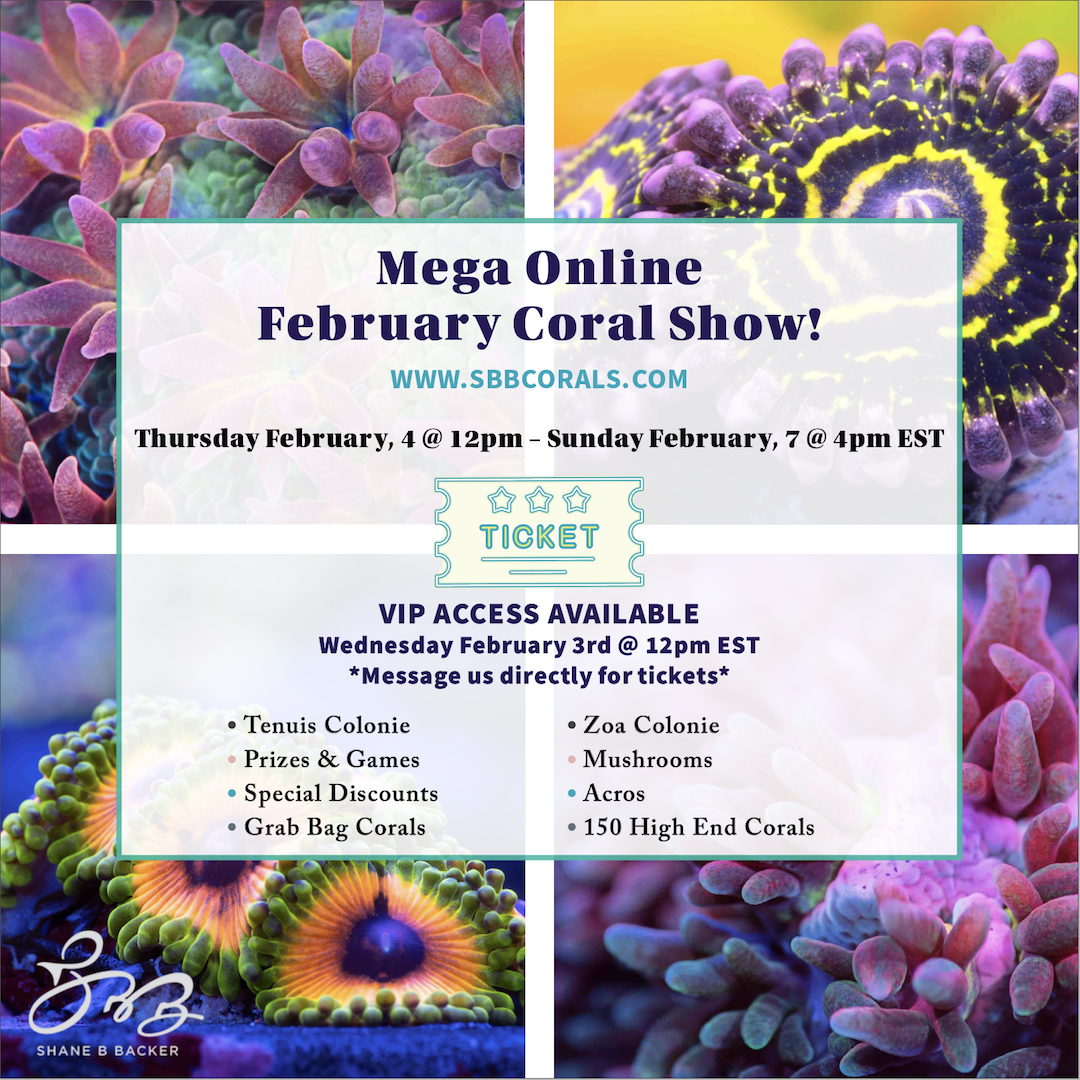 SBB_February Coral Show 1080x1080.png