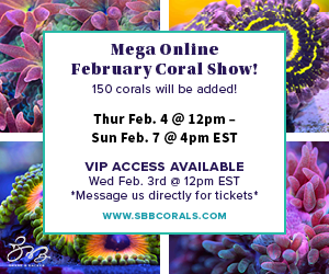 SBB_February Coral Show Ad 300x250.png