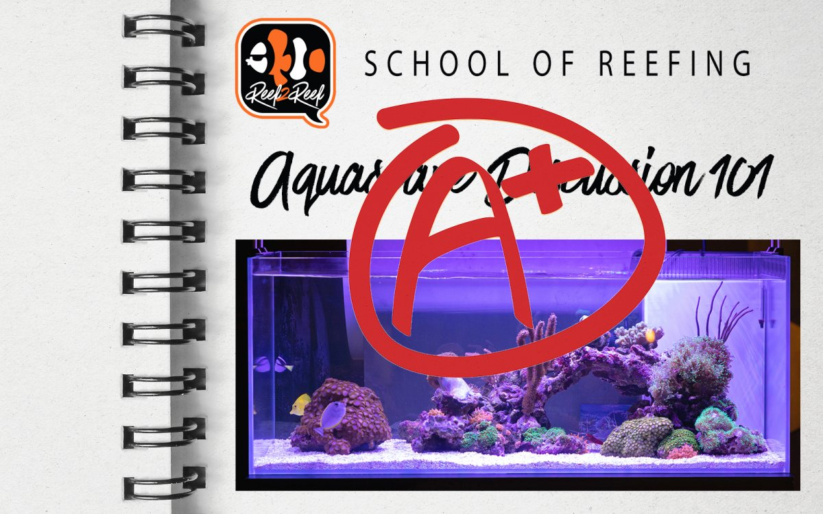 school of reefing.jpg