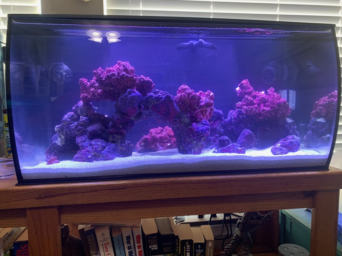 Scott's Reef.jpg