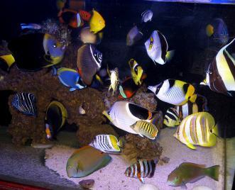 Rethinking The Fish Only Aquarium In The Postmodern Era