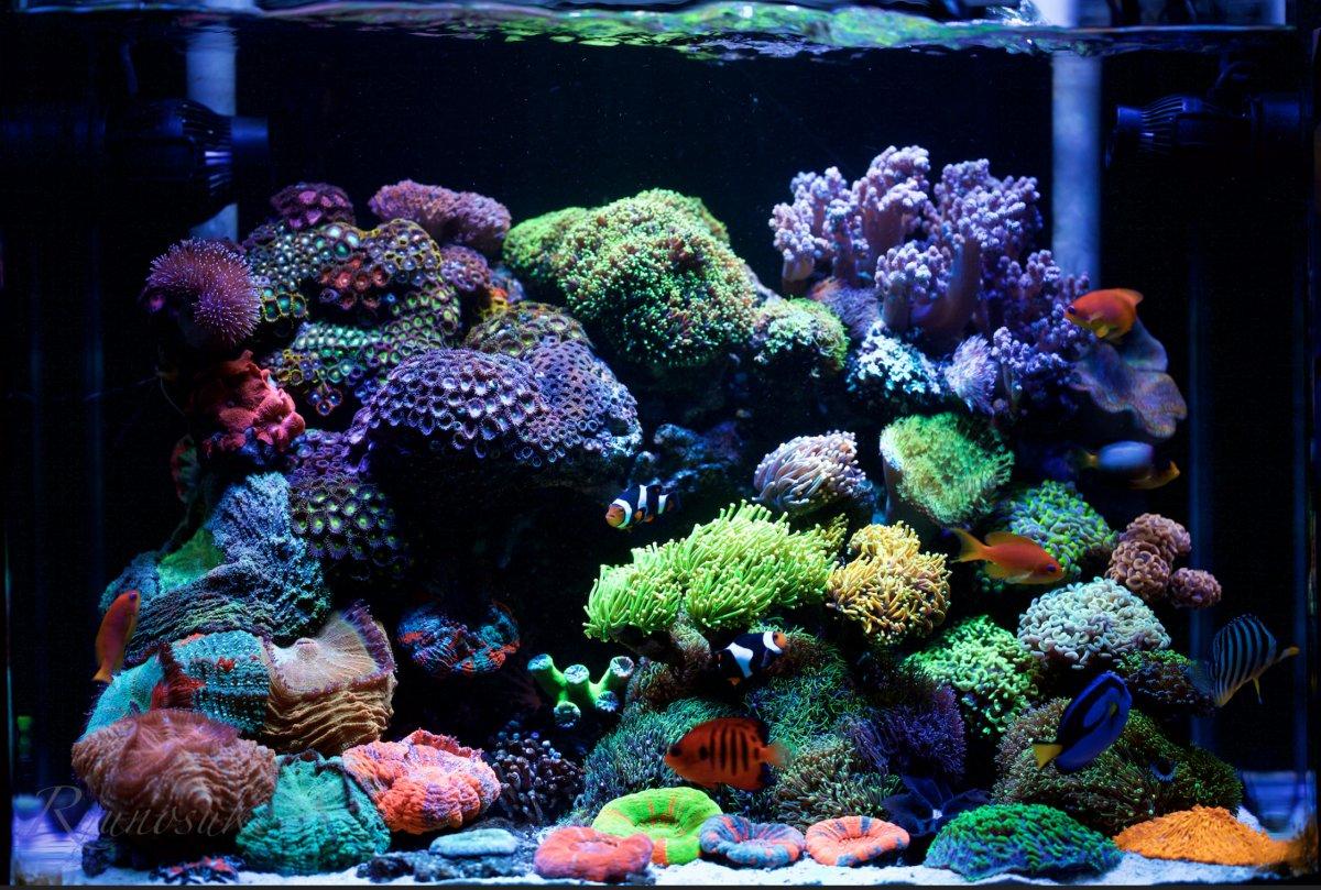 Screenshot_2020-03-25 My Reef Tank (1st, Mar, 2015)(1).jpg