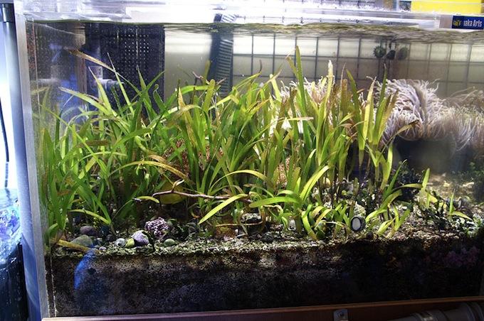 Seagrass_Japan2.jpg