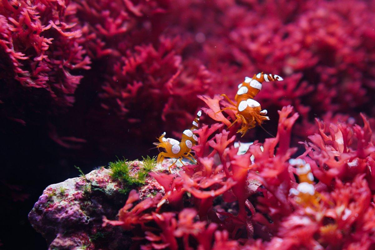 sexy shrimp.jpeg