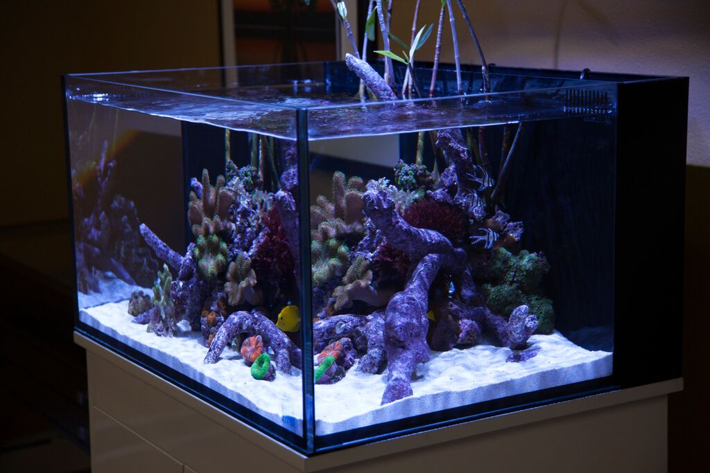 A Canvas For Aquatic Creativity First Look At The