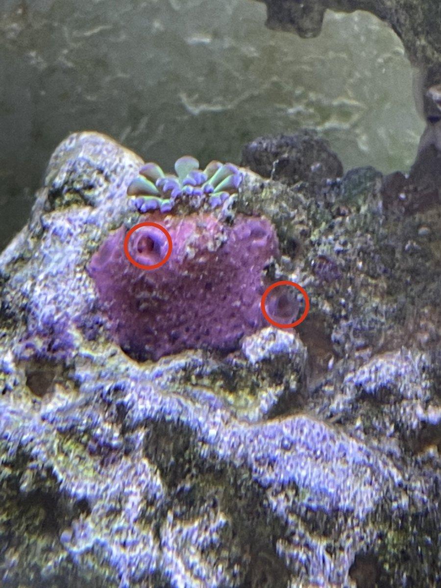 Sponge?.jpg