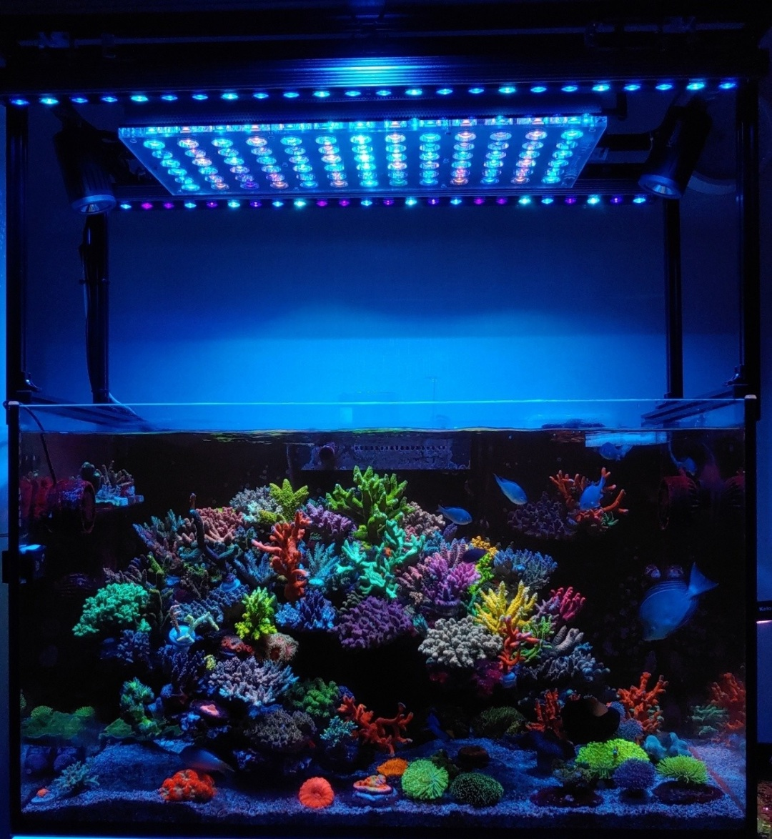 SPS_LPS_corals_Blue_Sky_OR3.jpg