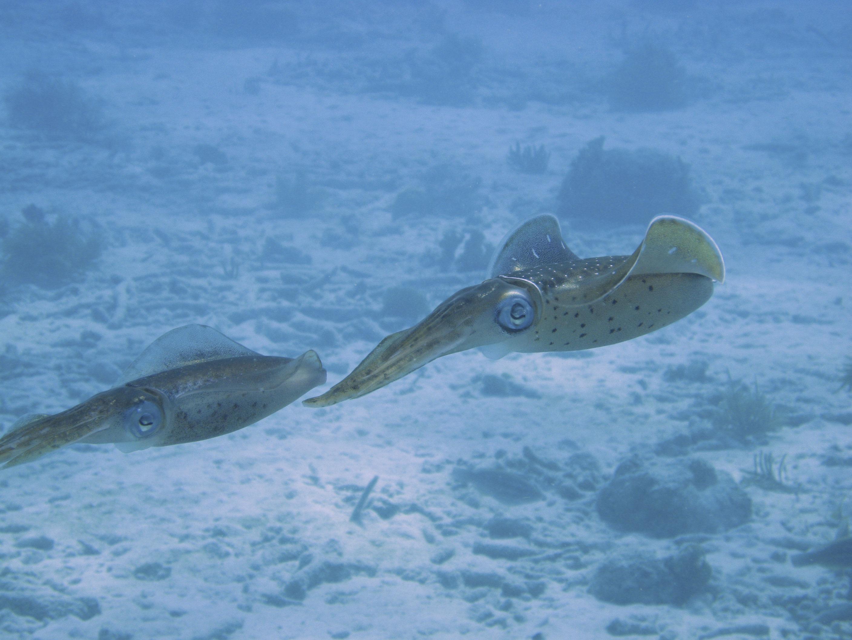 squid-101375.jpg