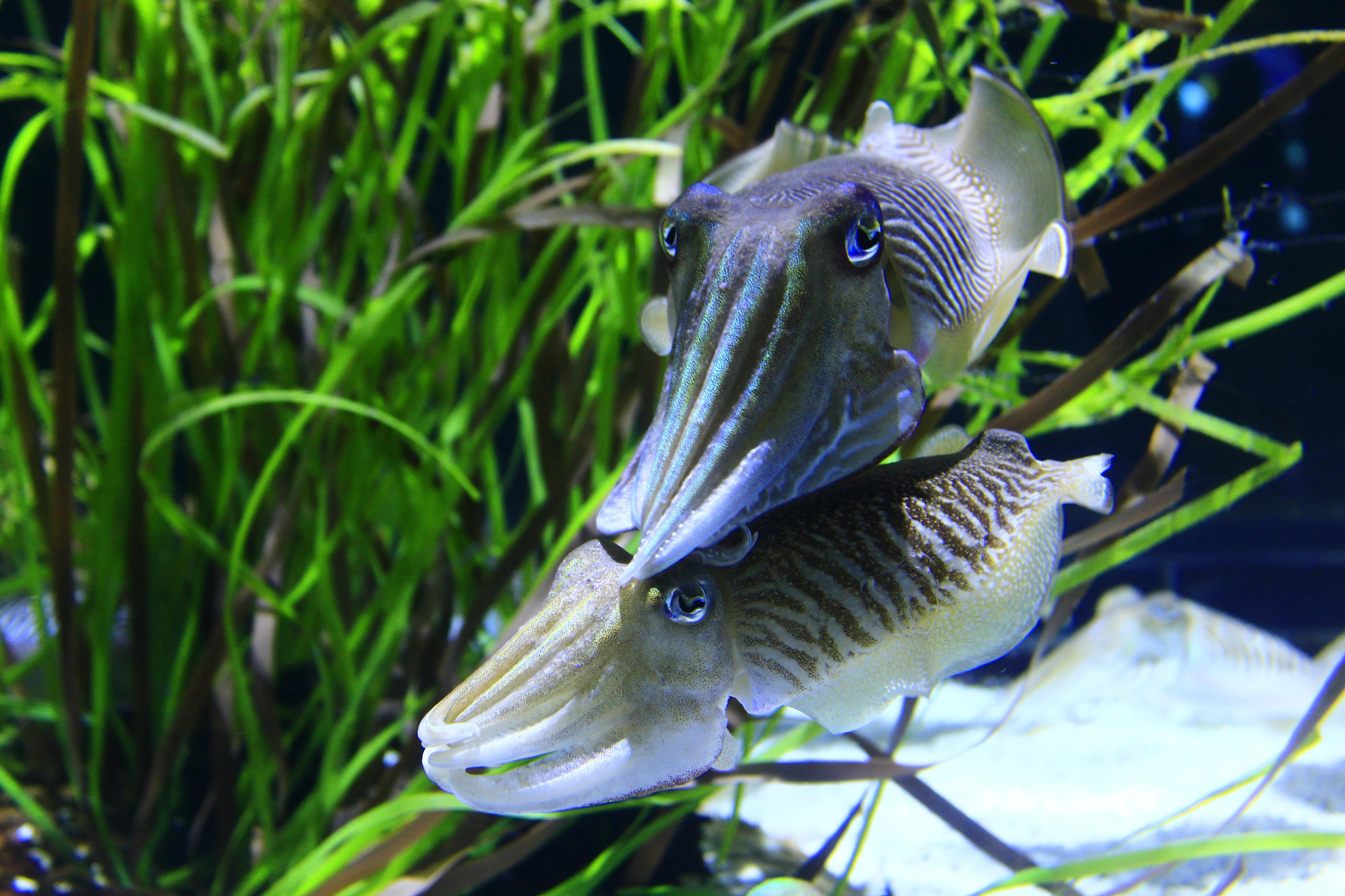 squid-1742361.jpg
