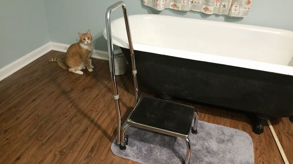 step stool.jpg