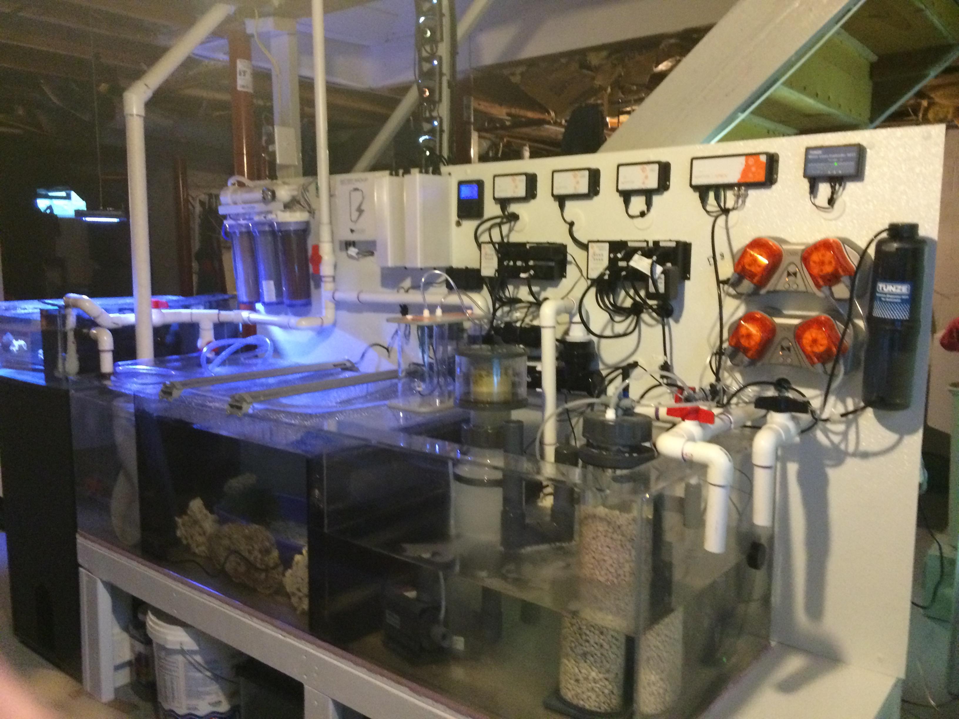 Here Is My Fish Room So Far Reef2reef Saltwater And Reef