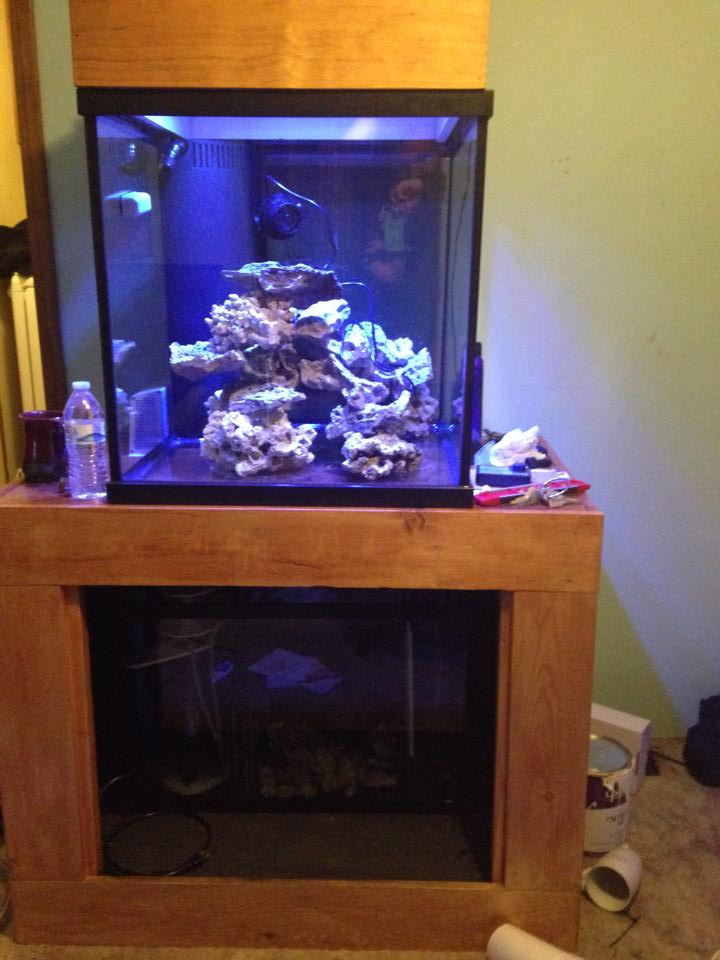 First Reef 60 Gallon Cube Build Reef2reef Saltwater And