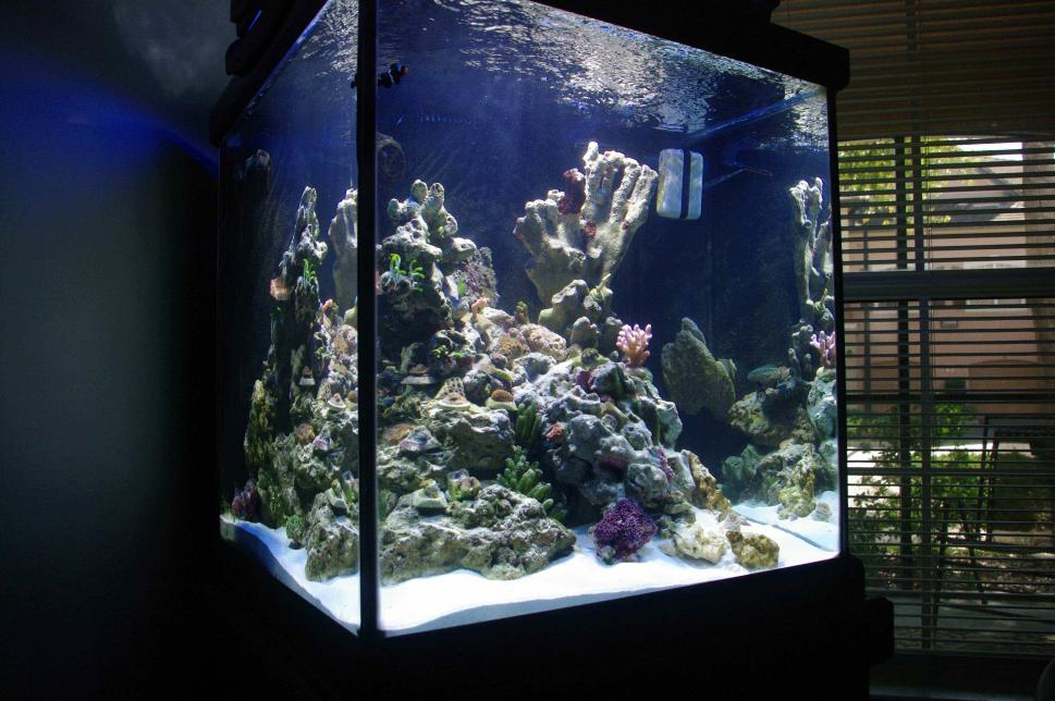 My 60 gallon cube reef2reef saltwater and reef aquarium for Cube saltwater fish tank