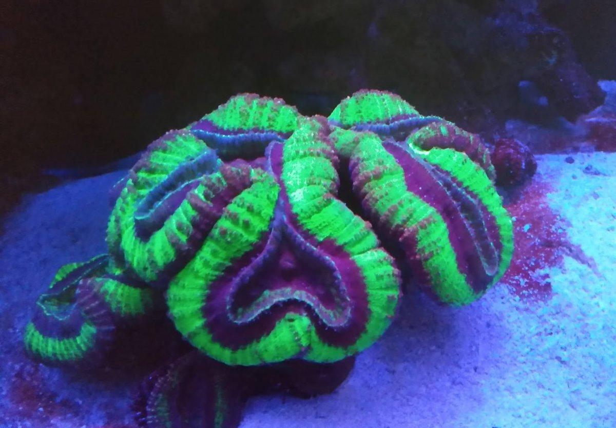 Tank Coral 052521.jpg