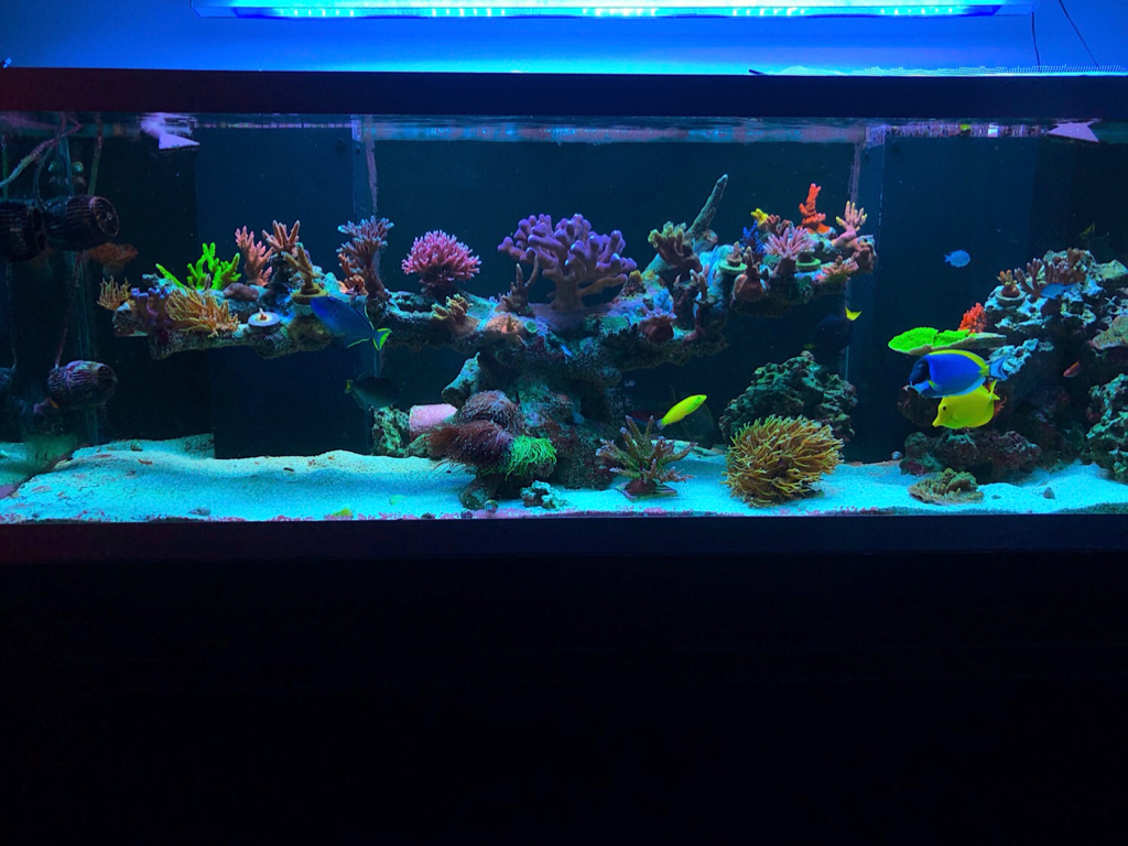 Ideas On Floating Aquascape Reef2reef Saltwater And Reef Aquarium Forum