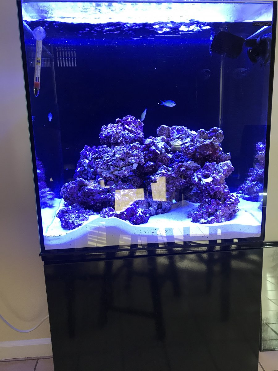 Six Month Old Aquatop 40 Gallon Cube Reef2reef Saltwater And Reef Aquarium Forum Aqueon 40 gallon standard glass aquarium tanks are made with care to assure that it can stand up to almost any application. six month old aquatop 40 gallon cube