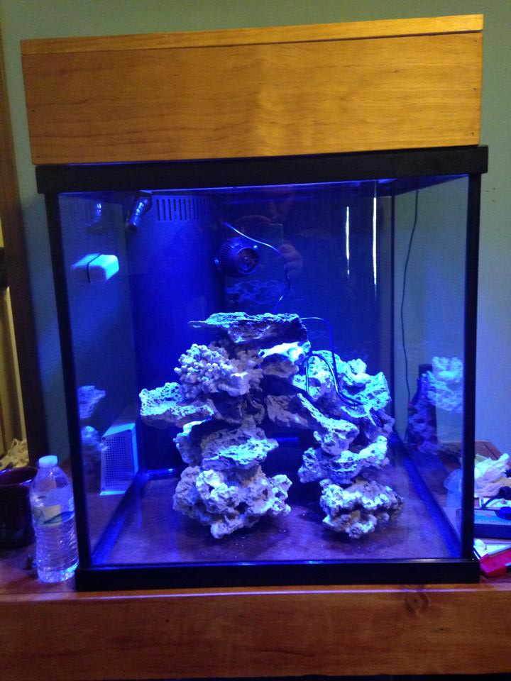 First reef 60 gallon cube build reef2reef saltwater and for Cube saltwater fish tank