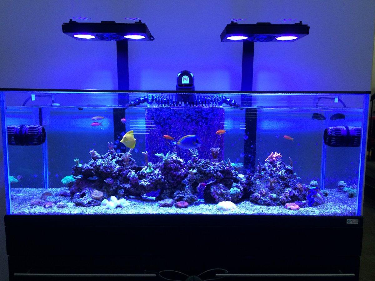 65 gallon custom rim less reef aquarium reef2reef saltwater and