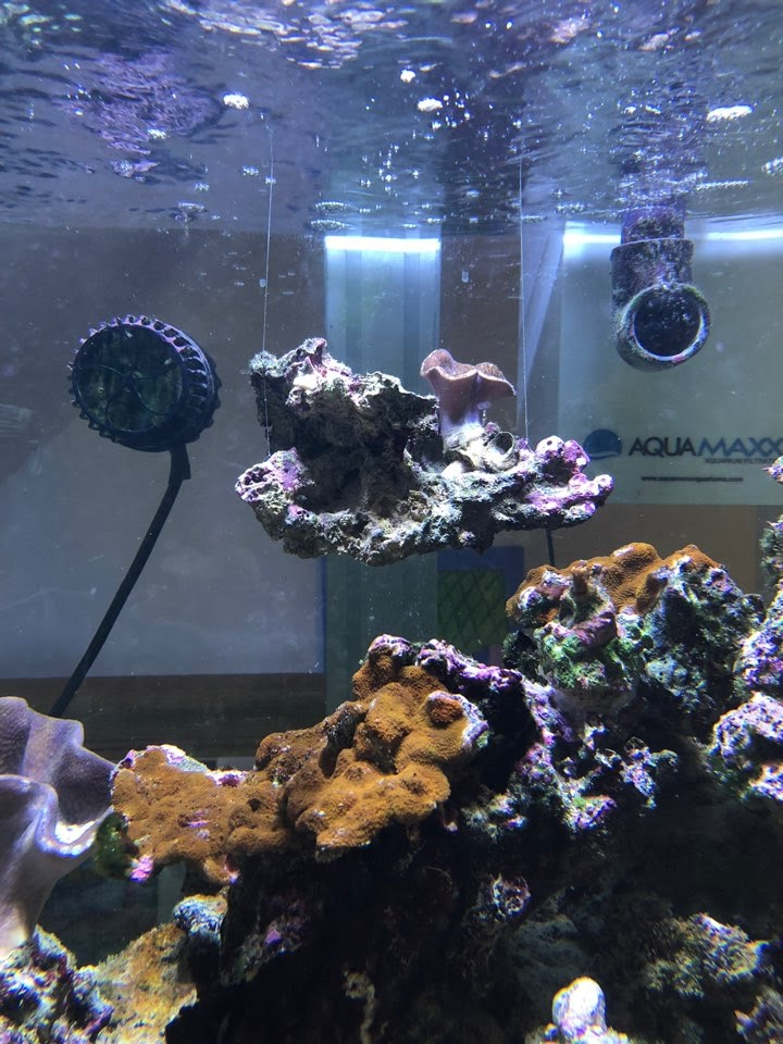 How To Make A Floating Reef
