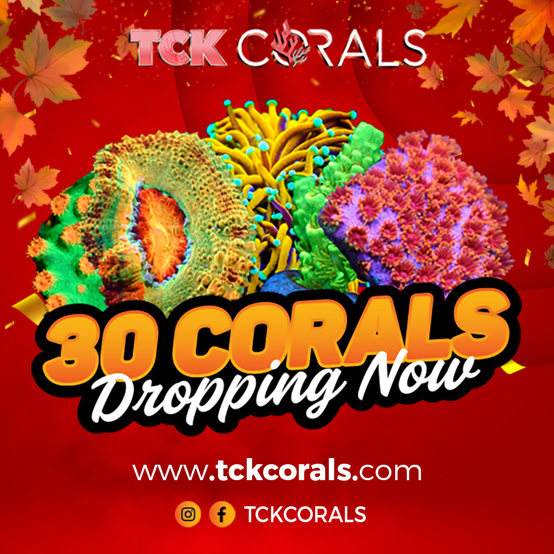 TCK 30 CORALS DROPPING NOW2 (1).png
