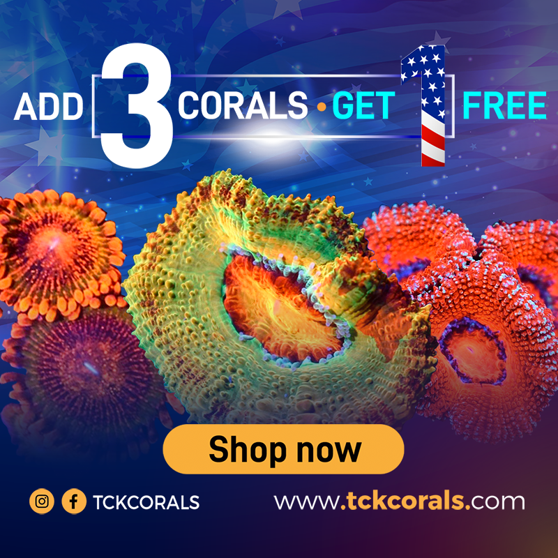 TCK banner add 3 corals get 1 free email 800 x 800 (1).png