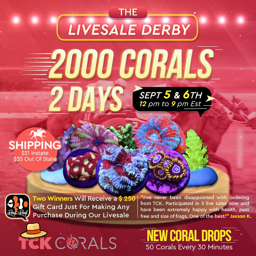 tck corals livesale derby 1080 x1080 px.png