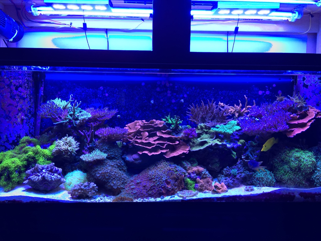 New Sps Aquascape Opinions Reef2reef Saltwater And Reef Aquarium