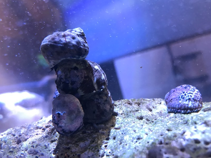 Tower of snails.jpg