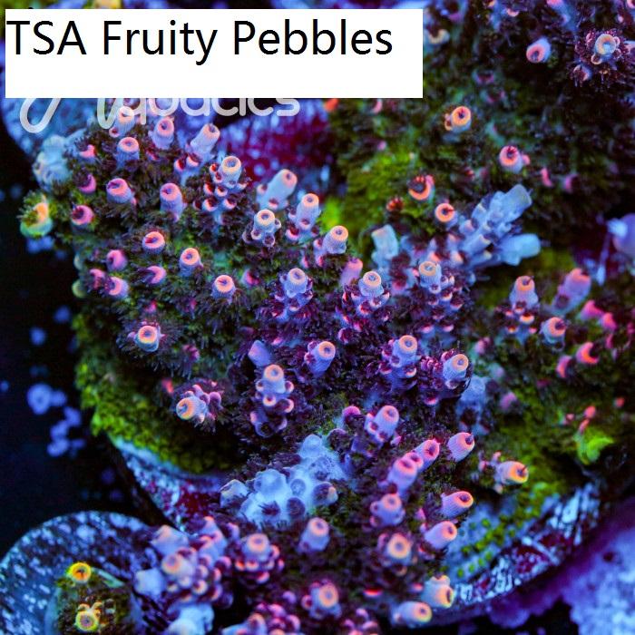 TSA-Fuity-Pebbles--700x700.jpg