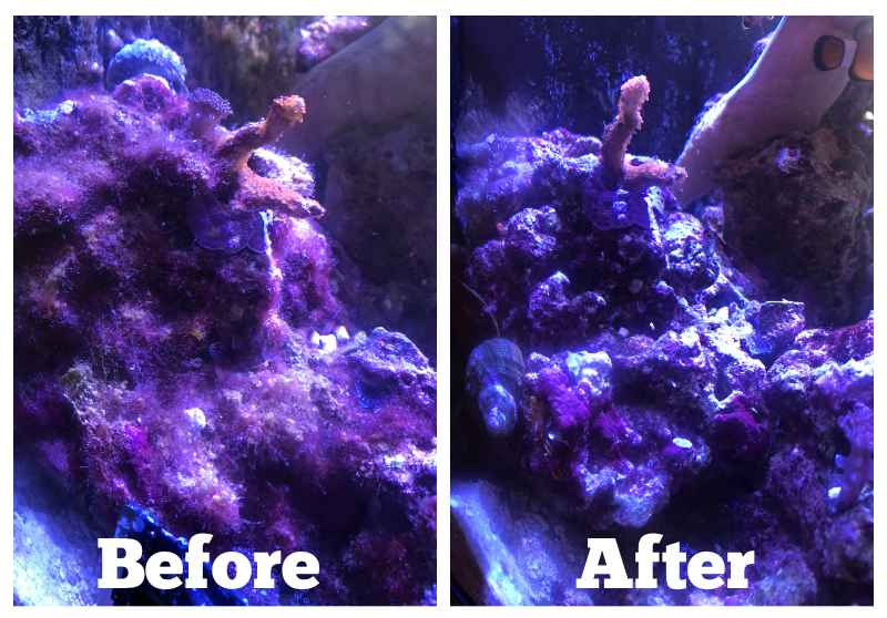 Turbo-Snail_Clean-Up.jpg