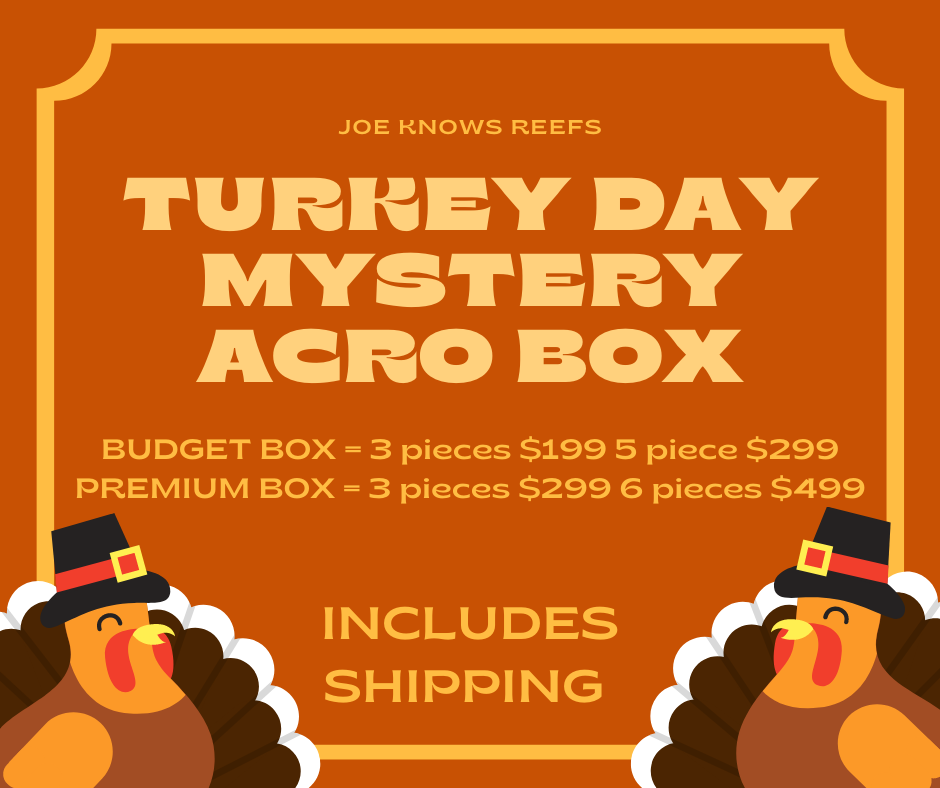 turkey day mystery box.png