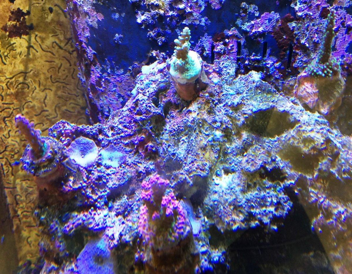 Tys Corals 5-11-17.jpg