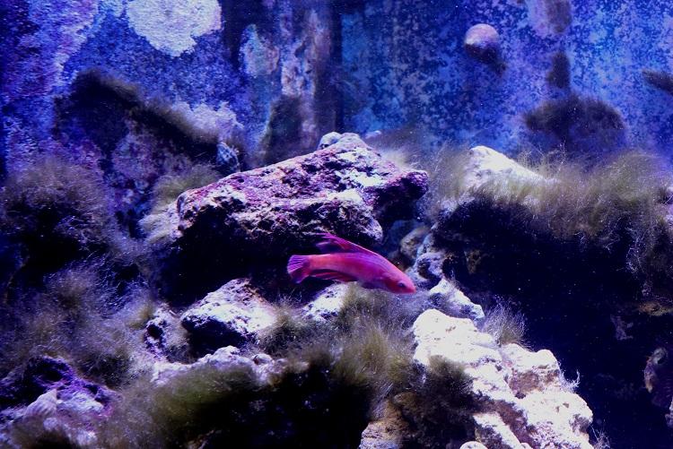 Ugly algae resized.jpg