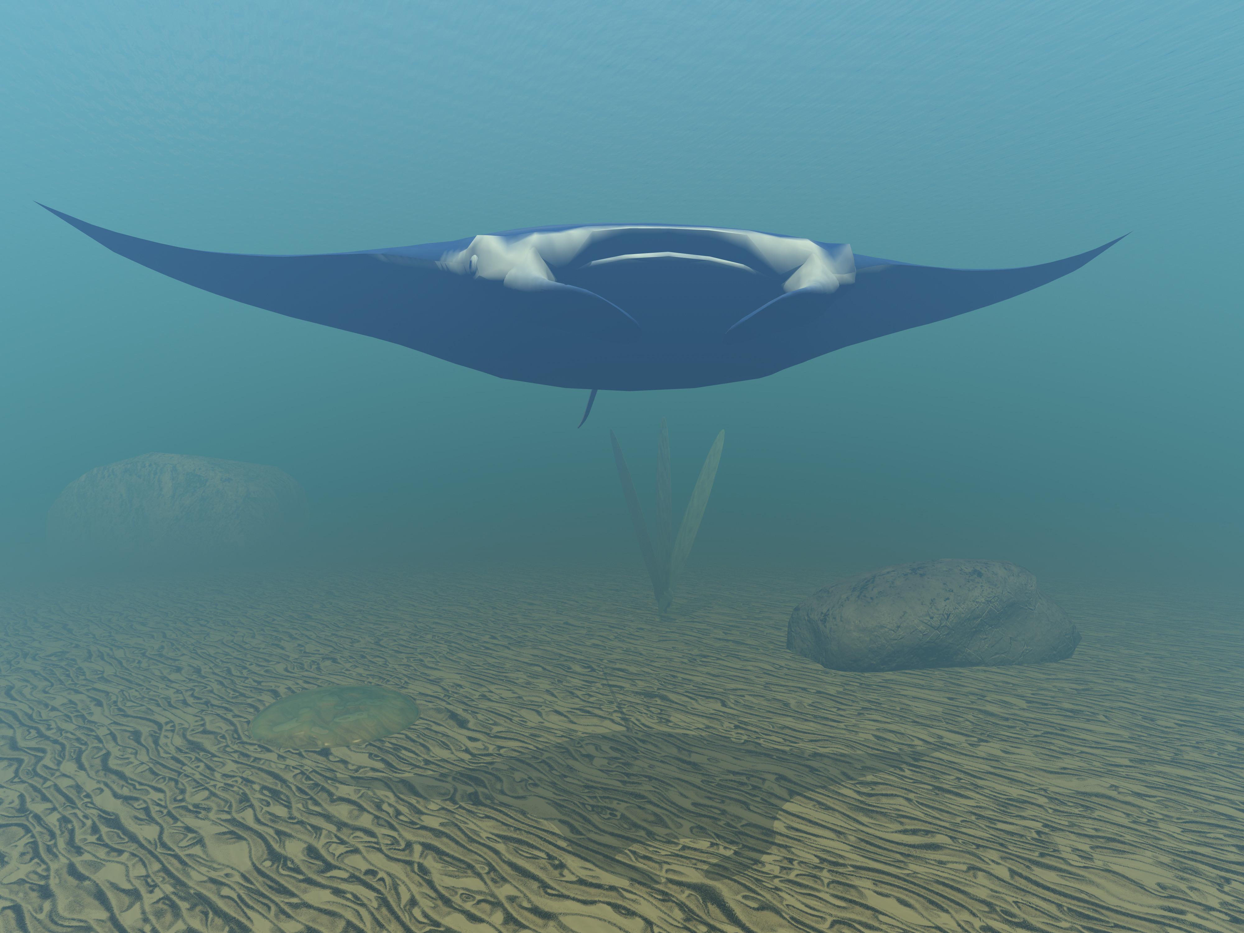 underwater_zkKXxIqd.jpg