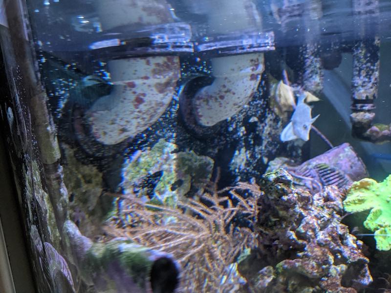 UnderwaterOverflow.jpg