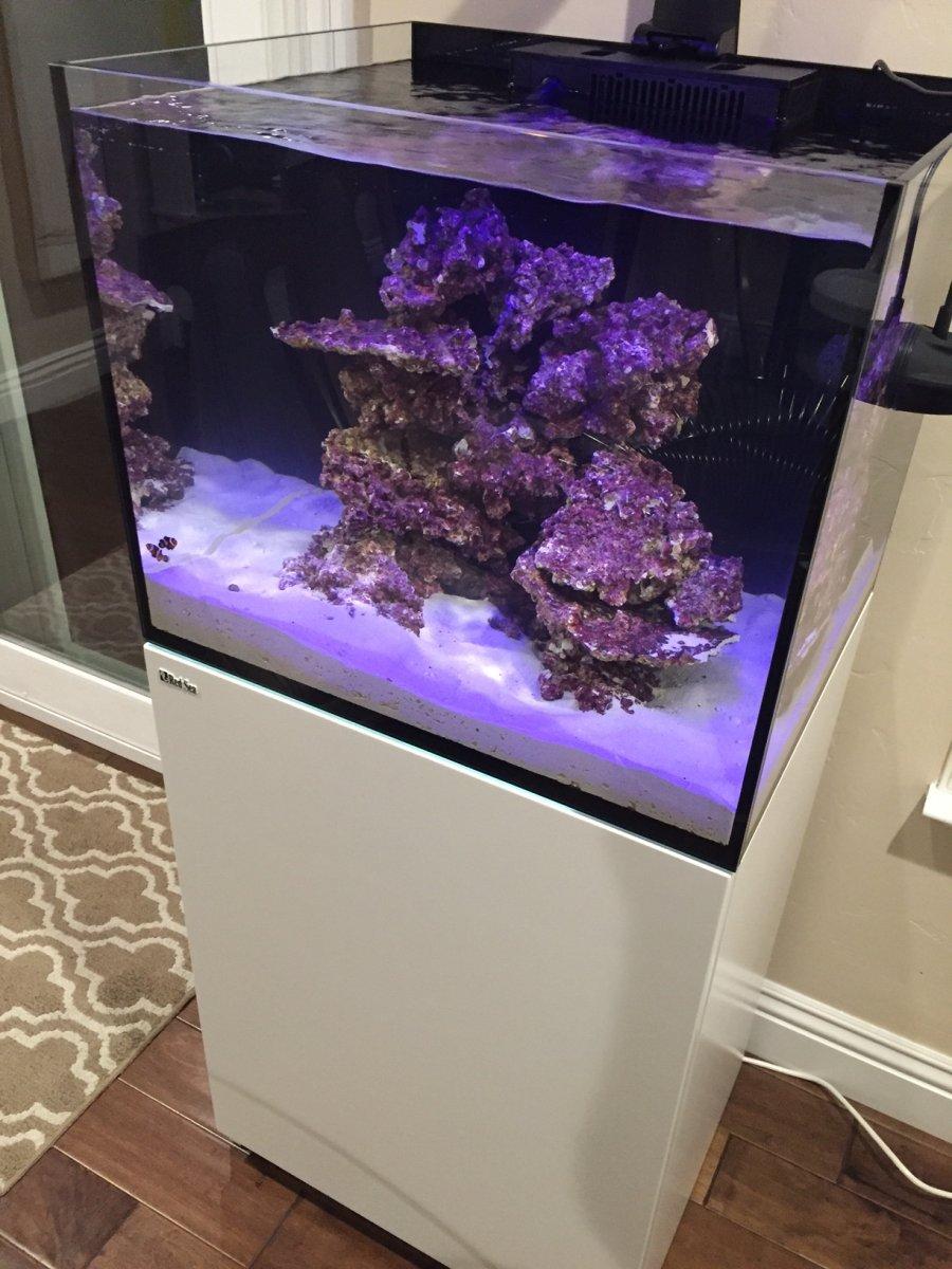 Bcribs Red Sea Reefer 170 Build Thread Reef2reef Saltwater And Reef Aquarium Forum
