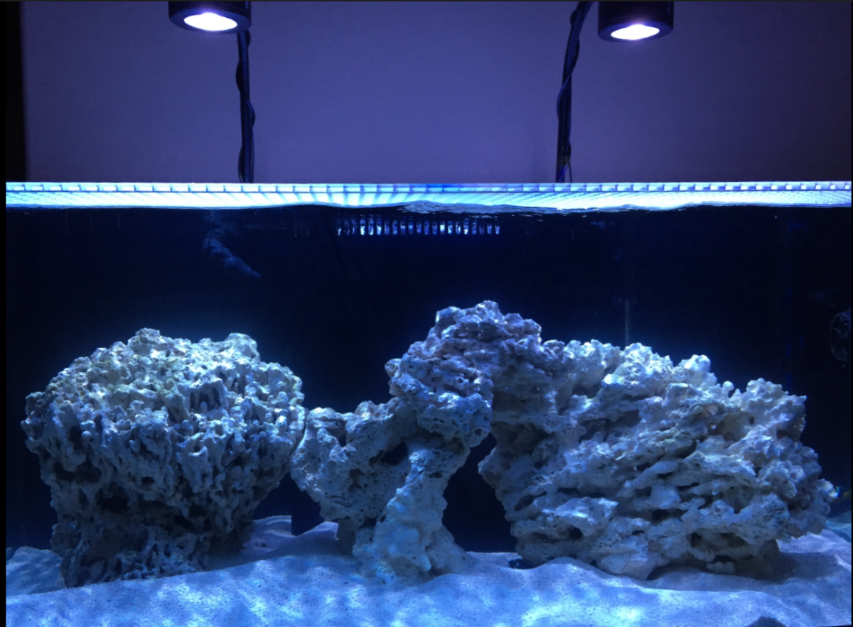 how to clear a cloudy saltwater tank
