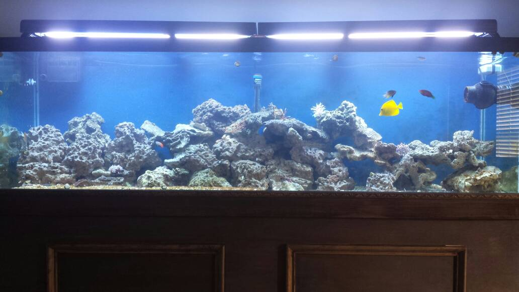 Shika 39 S 210g Upgrade Build Reef2reef Saltwater And Reef