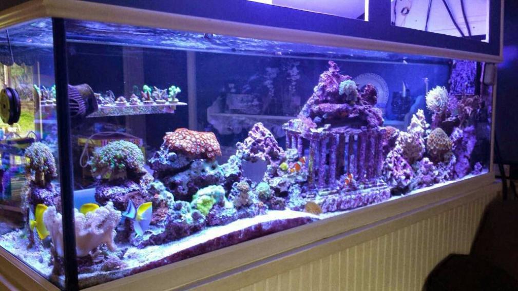 Marine safe tank ornaments decor reef2reef saltwater for Aquarium log decoration