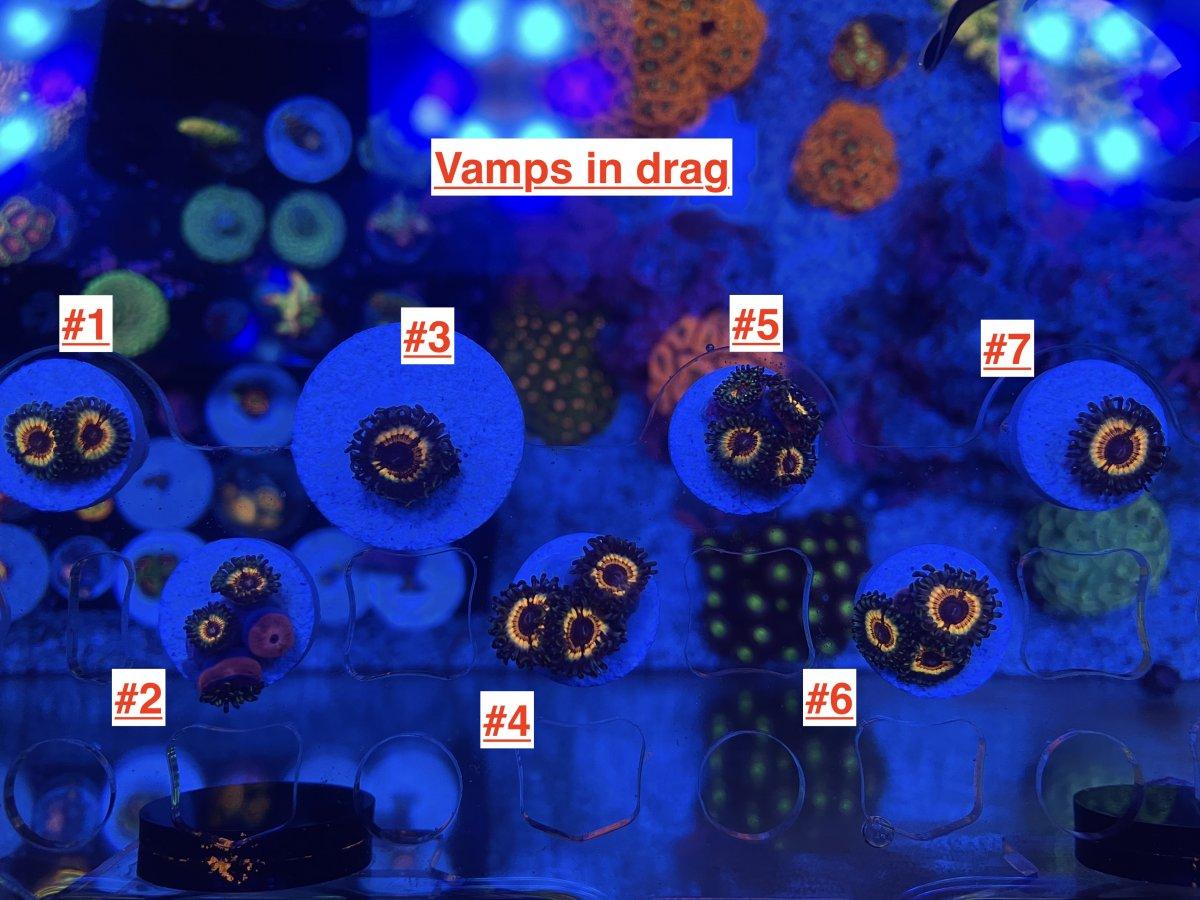 Vamps in drag.JPG