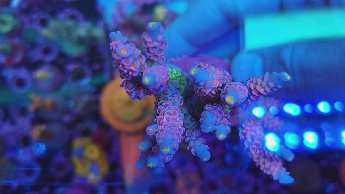 VideoCapture_20210820-010114.jpg