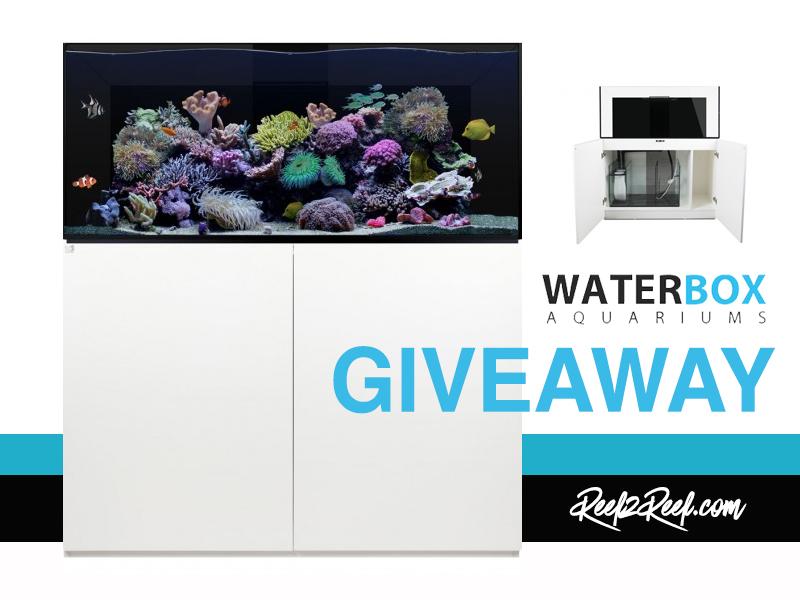 waterbox giveaway.jpg