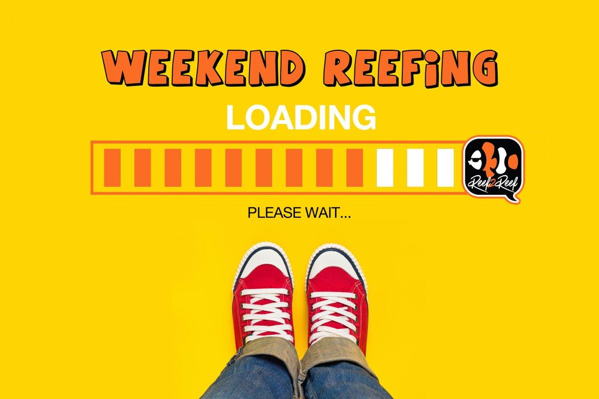 weekend reefing.jpg