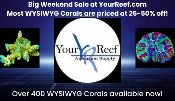 Weekend Sale.jpg