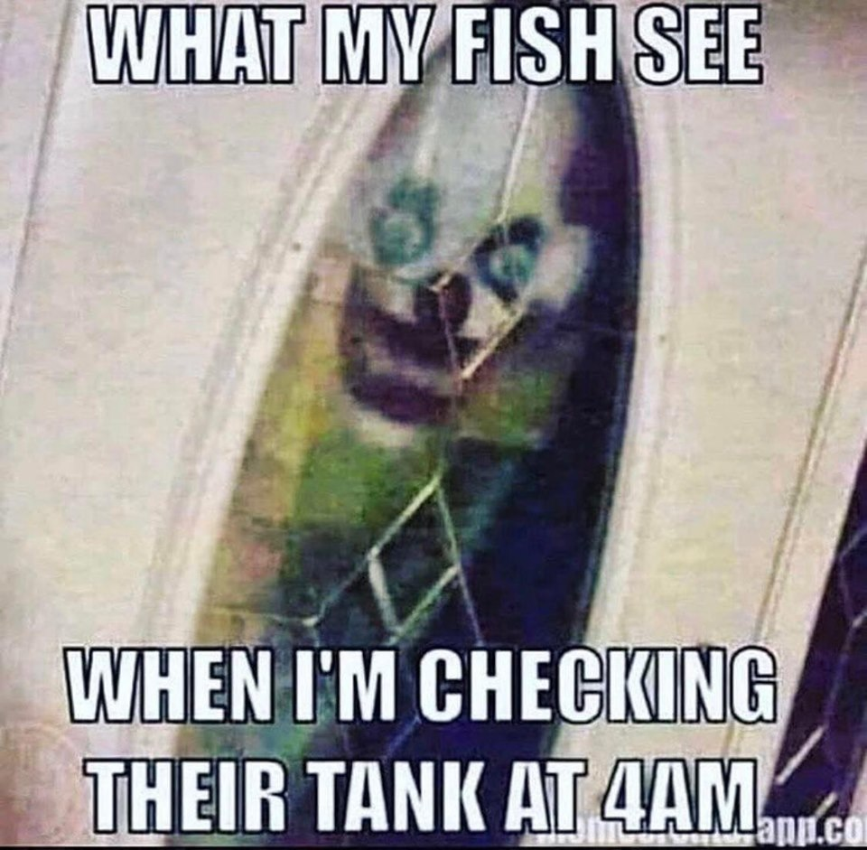 what fish see.jpg